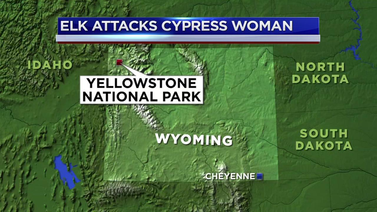 Cypress woman attacked by elk at Yellowstone National Park