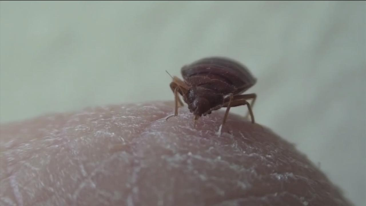 HCTRA warns employees of bed bug infestation