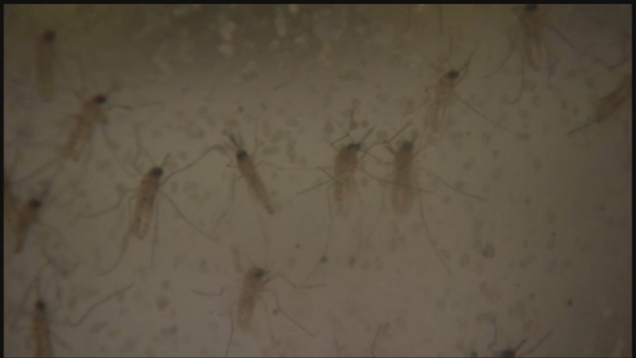 West Nile virus cases increase in Houston, Harris County