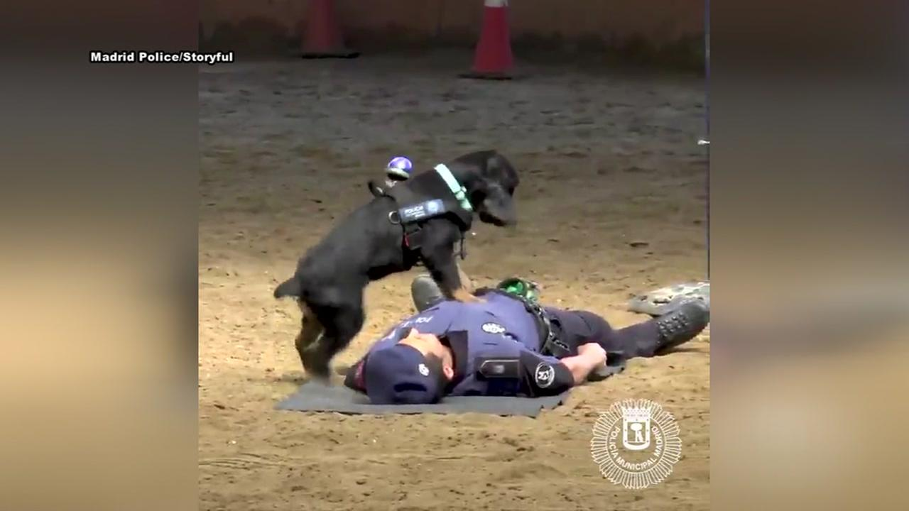 Police dog demonstrates CPR