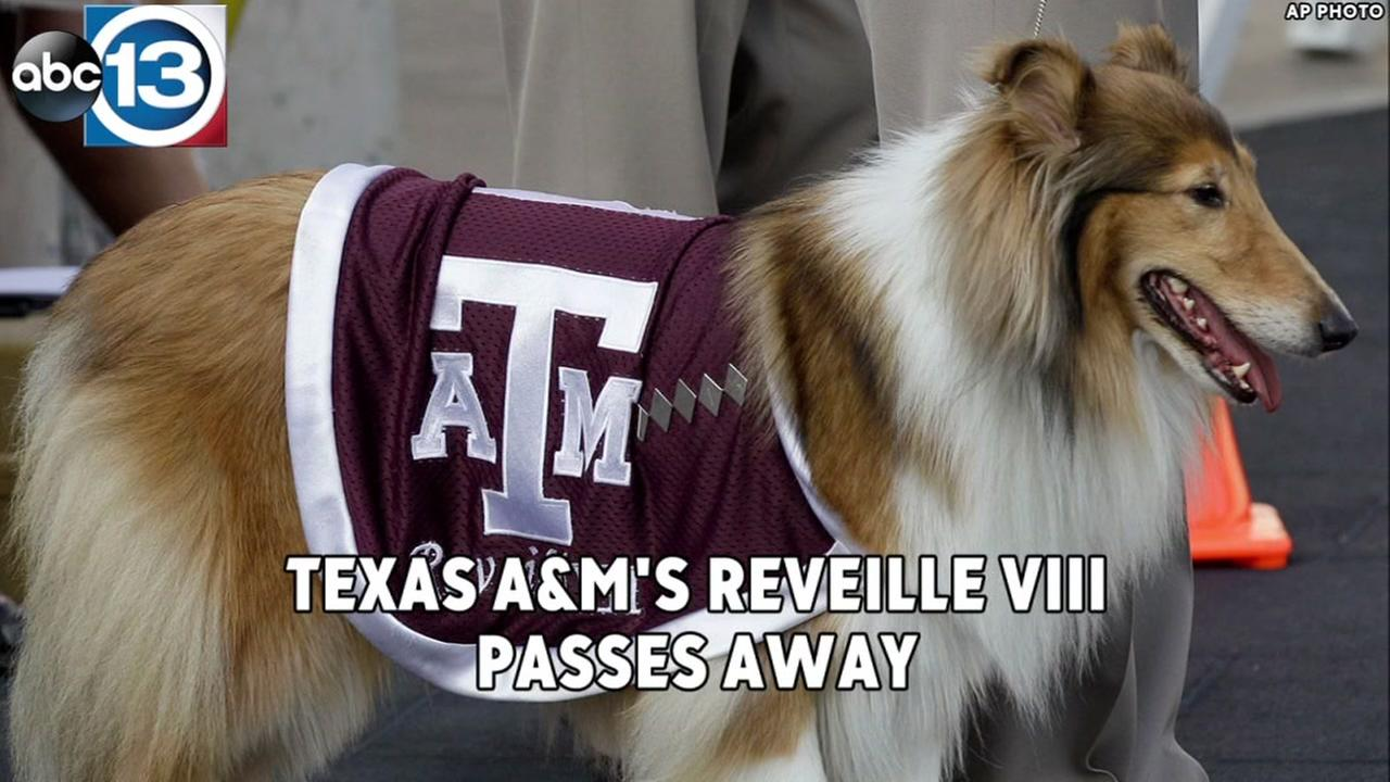 Reveille VIII, one of the latest iconic canines who served as Texas A&Ms symbol of athletic pride, has passed away.