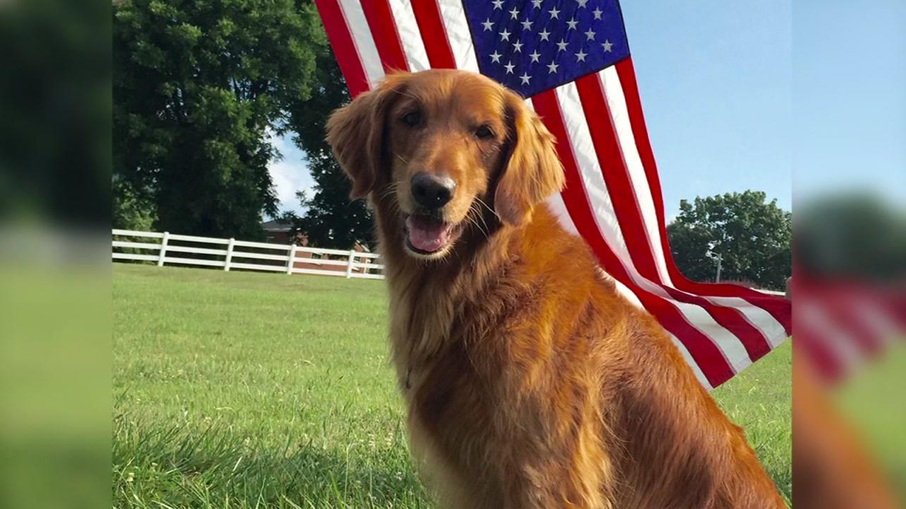 Dog who portrayed Duke in Bushs Baked Beans commercials dies
