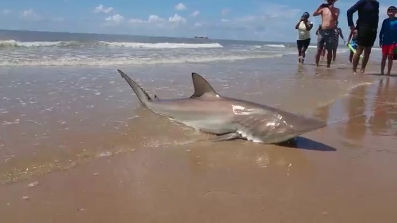 Woman reels in shark off Surfside Beach