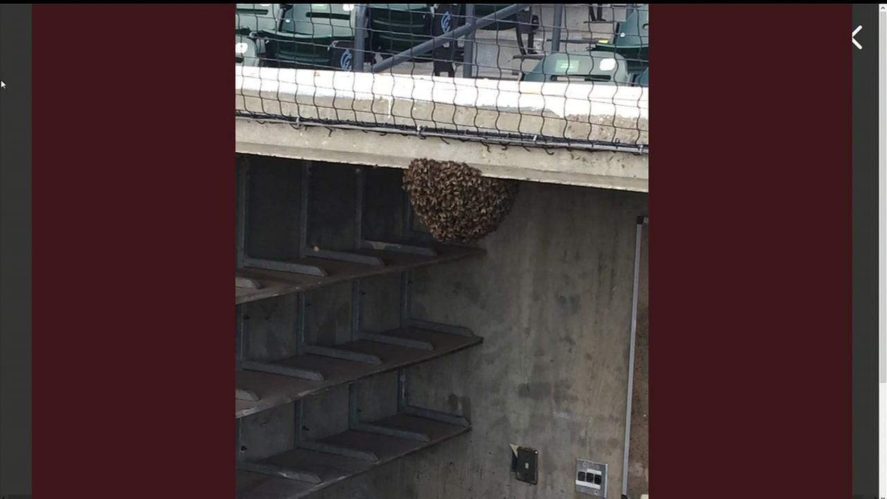 Corpus Christi Hooks dugout swarmed by bees