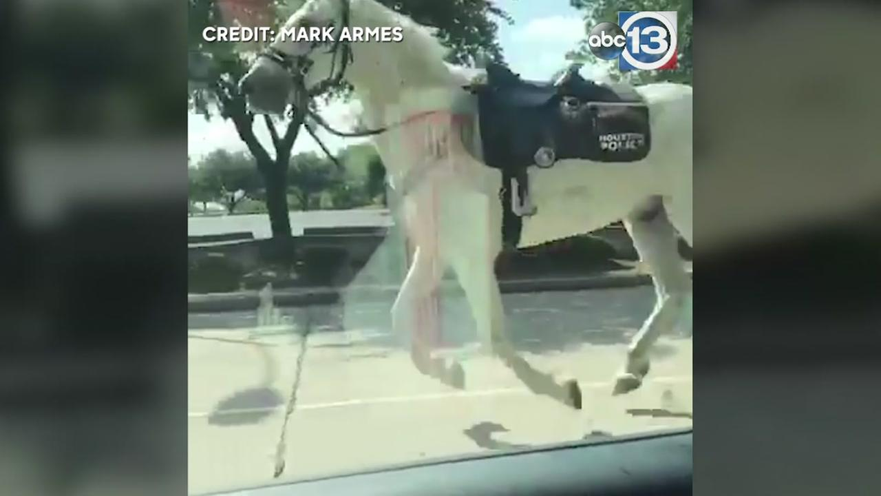Runaway horse gallops around downtown Houston