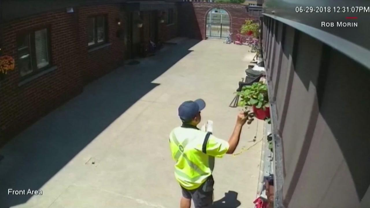 Postman steals tomatoes