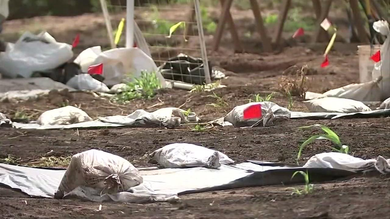 Caravan to Sugar Land honors remains of forced labor workers found at historic cemetery