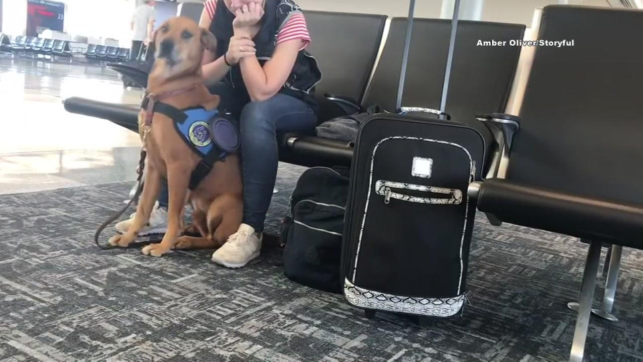 Service dog in action caught on video
