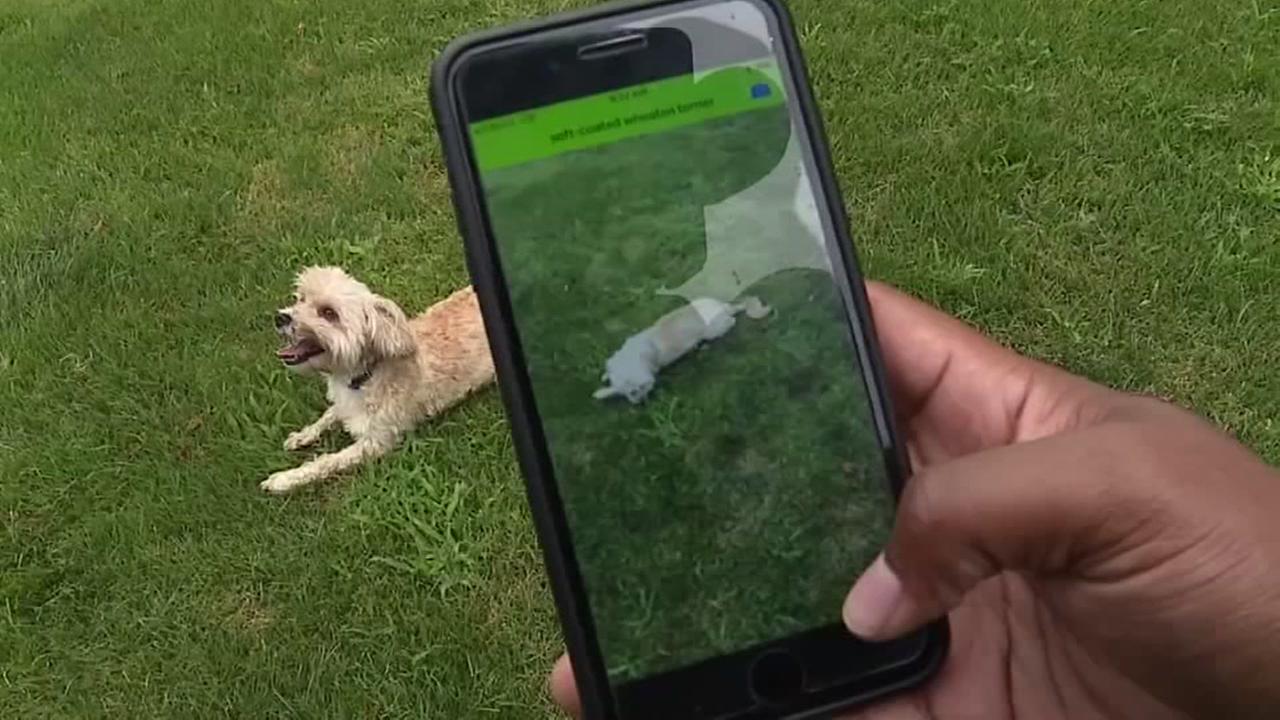 Dog app
