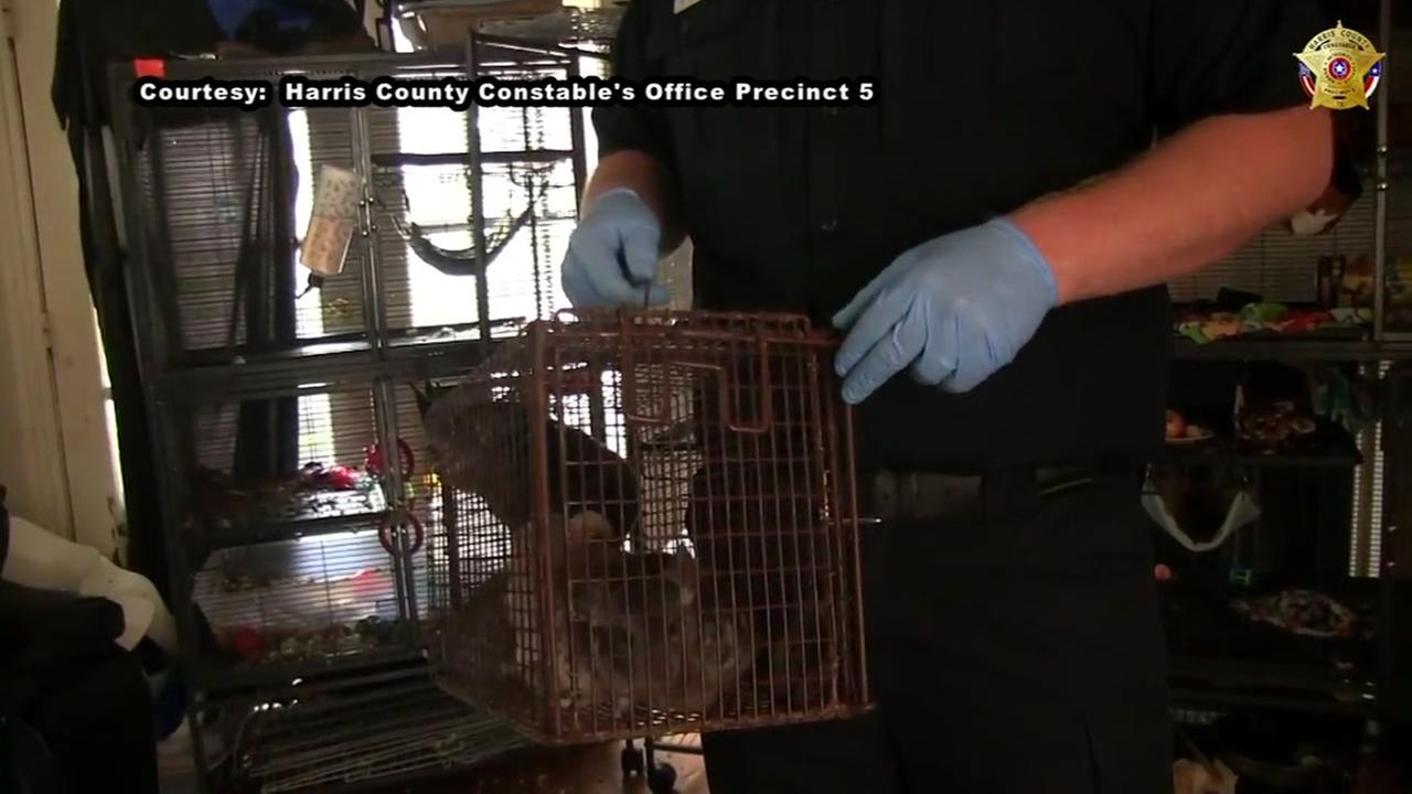 More than 100 exotic animals seized in SW Houston