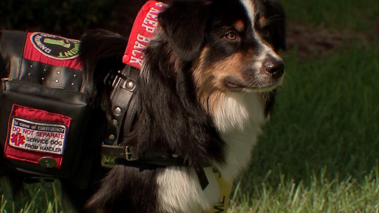 Service dog denied entry to Houston museum