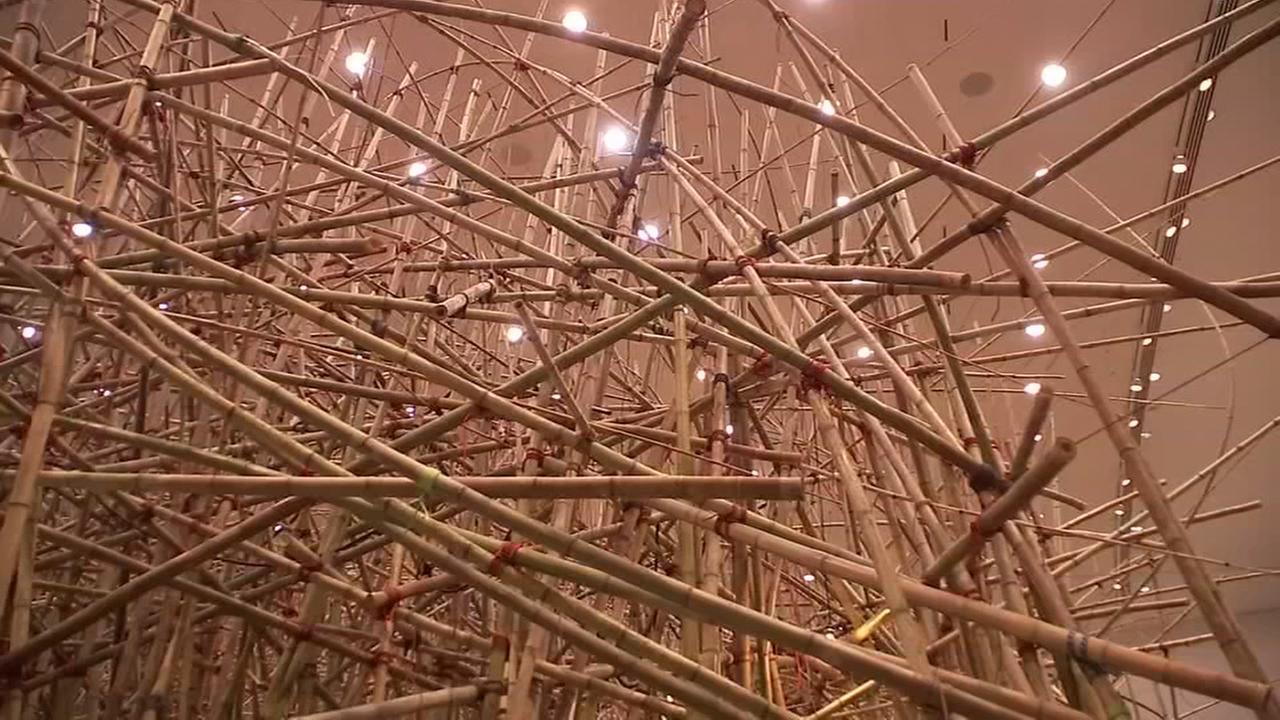 080418-ktrk-abc13u-bamboo-vid