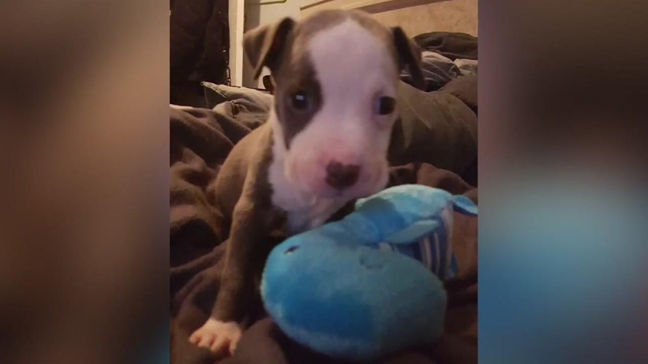 Dog dies while protecting family from intruder