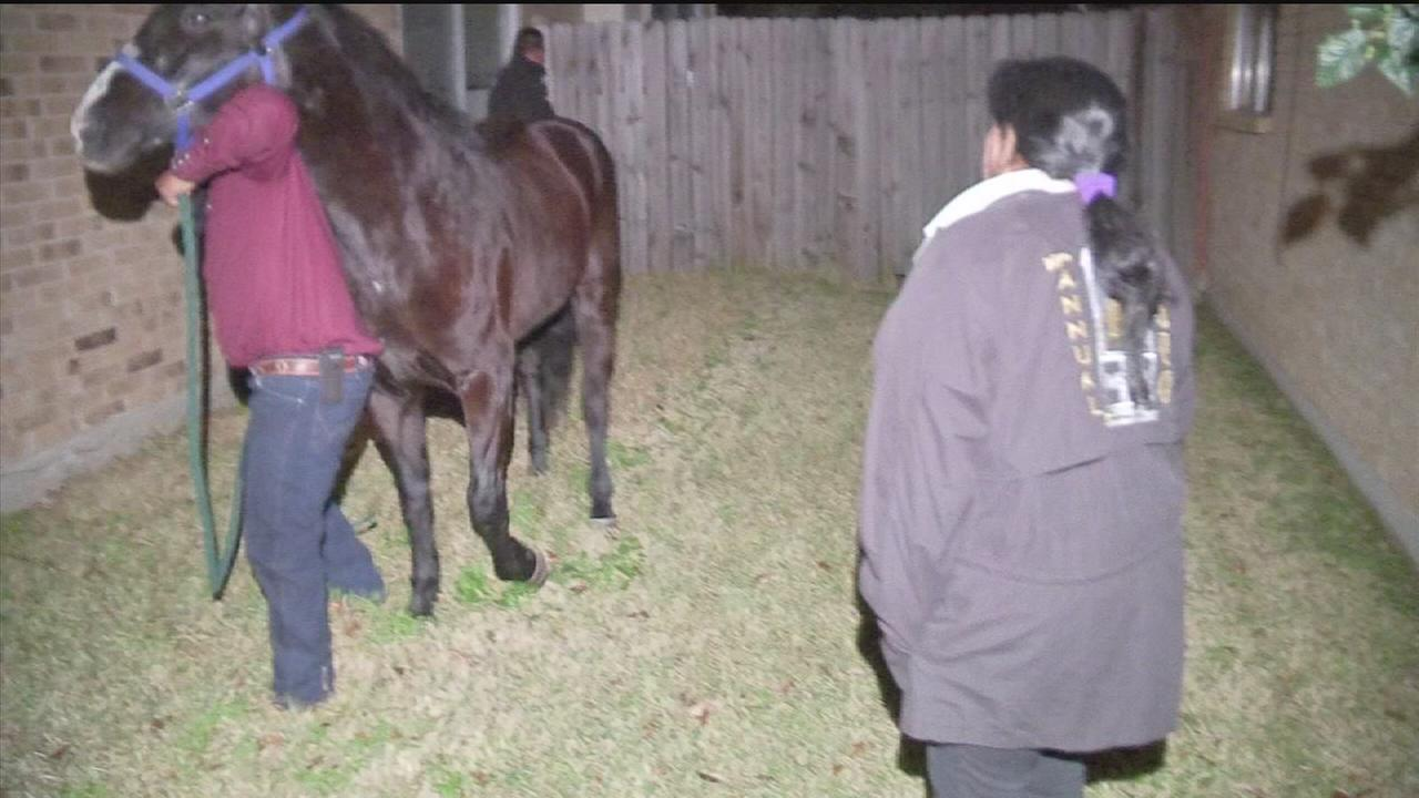 Group S Horse Goes Missing During Rodeo Trail Ride Abc13 Com