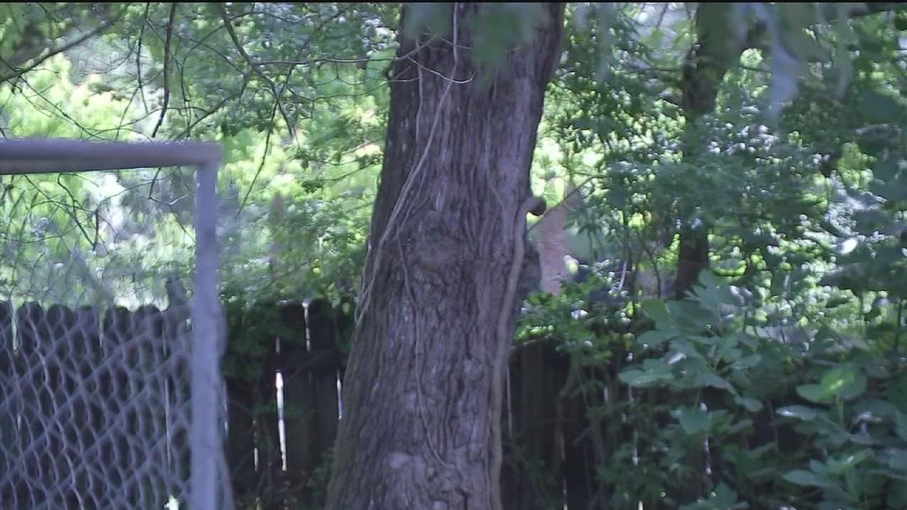 Man sees Jesus in tree?