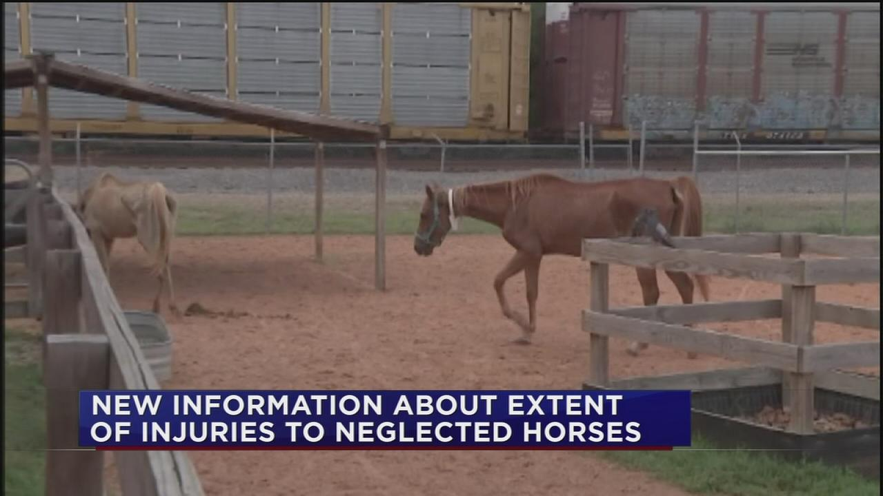 SPCA could need $500,000 to care for seized horses