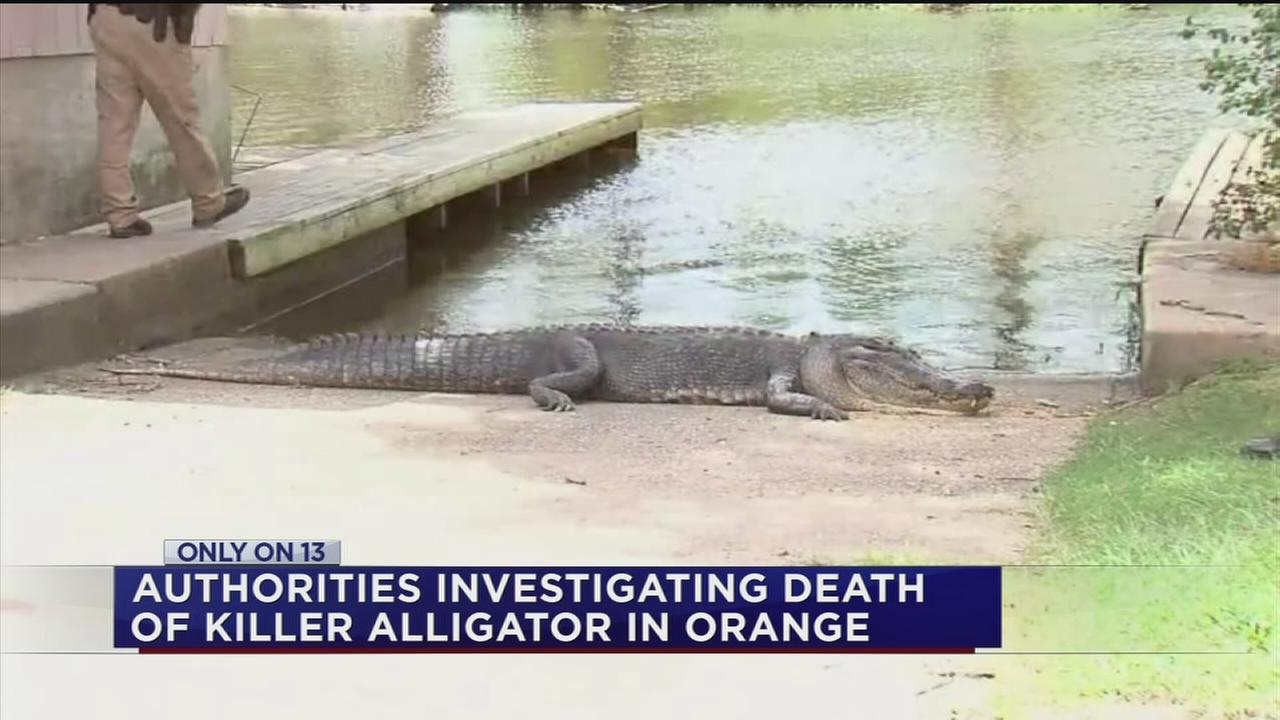 Stunning new deatils about deadly gator attack in OrangeWildlife officials are investigating the person who hunted down the alligator that attacked a swimmer at a Southeast Texas marina
