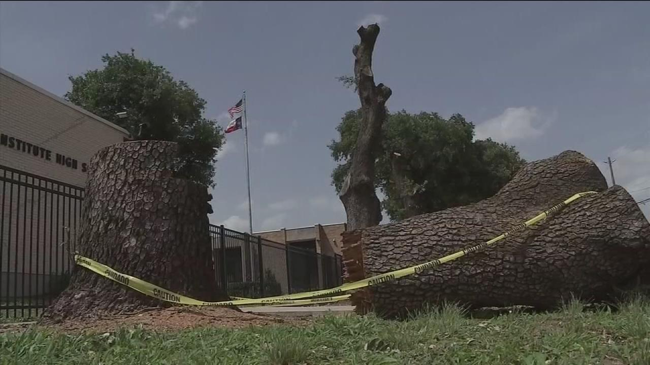 HISD admits to pruning without permission on city property