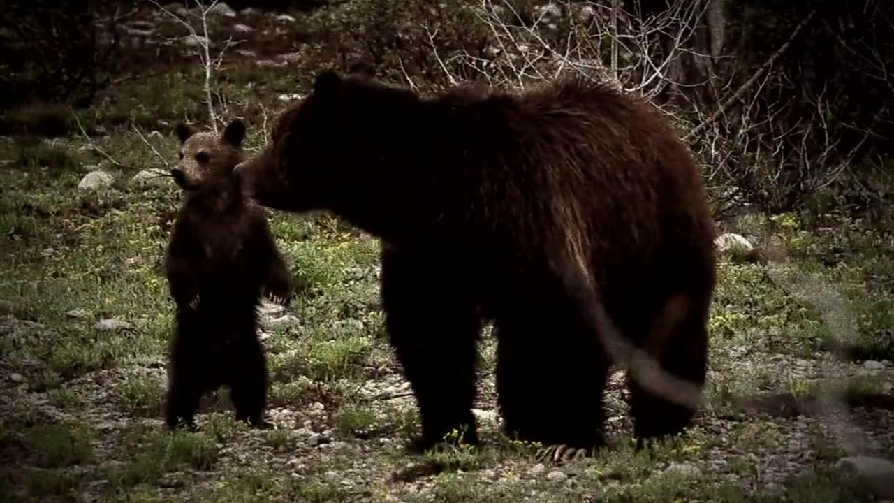 081015-ktrk-grizzly-attack-vid