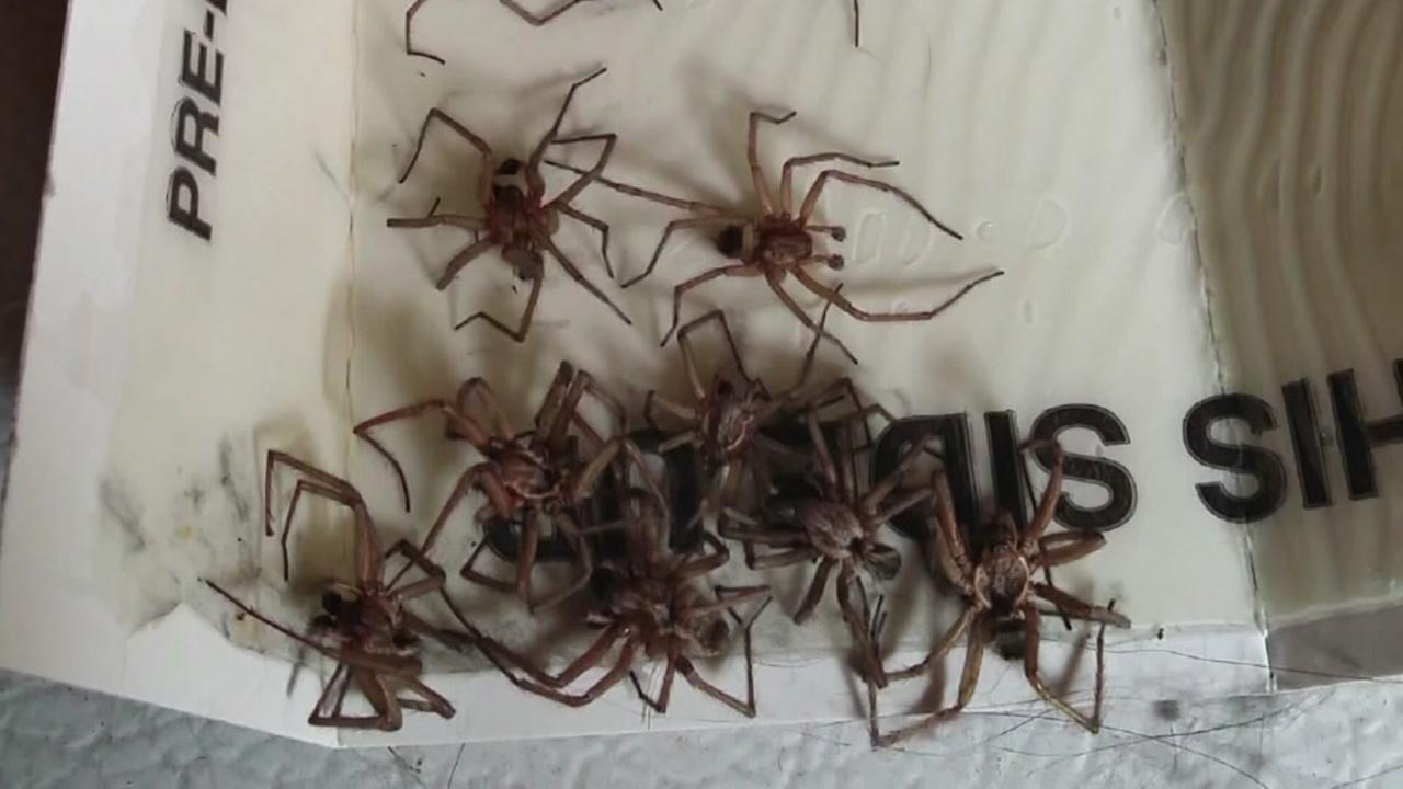 090815-ktmf-hobo-spider-invasion-vid