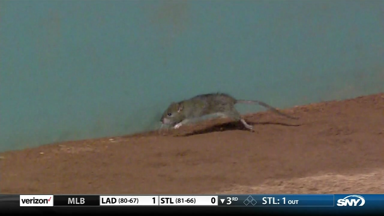 A rodent founds it way in the middle of a Red Sox vs Mets game.