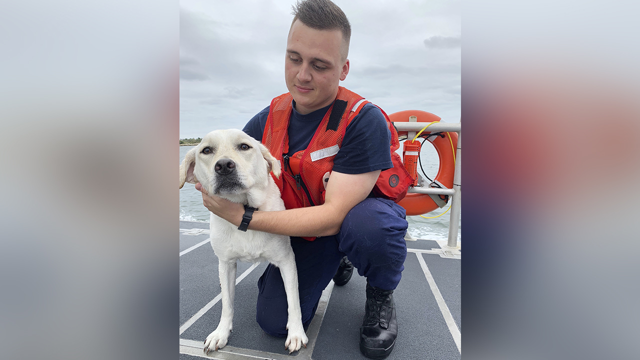 In this photo provided by the United States Coast Guard, Seaman Tristan Beatty holds Pepper who was rescued from the Long Island Sound waters off Cedar Beach, N.Y..