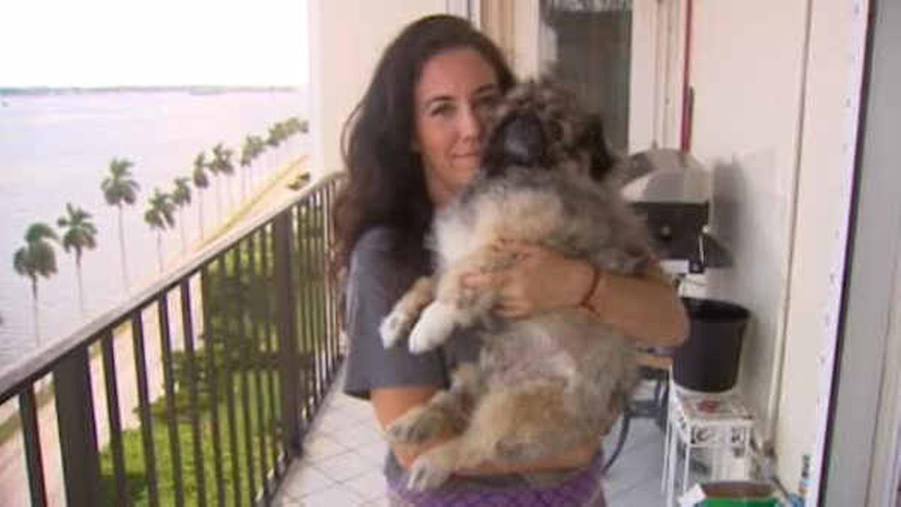 Lucky dog: Pooch survives 11-story plunge from condo balcony in Florida