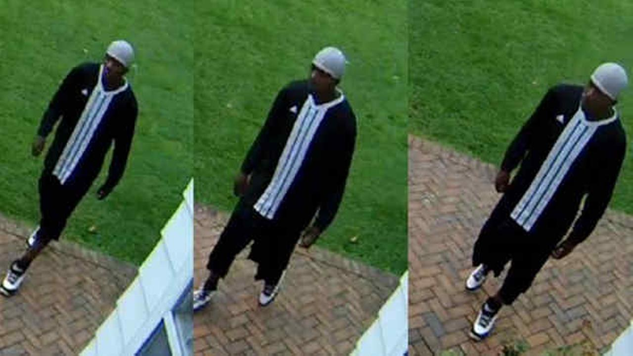 VIDEO: 'Cat'-burglar steals cat food from Southampton home