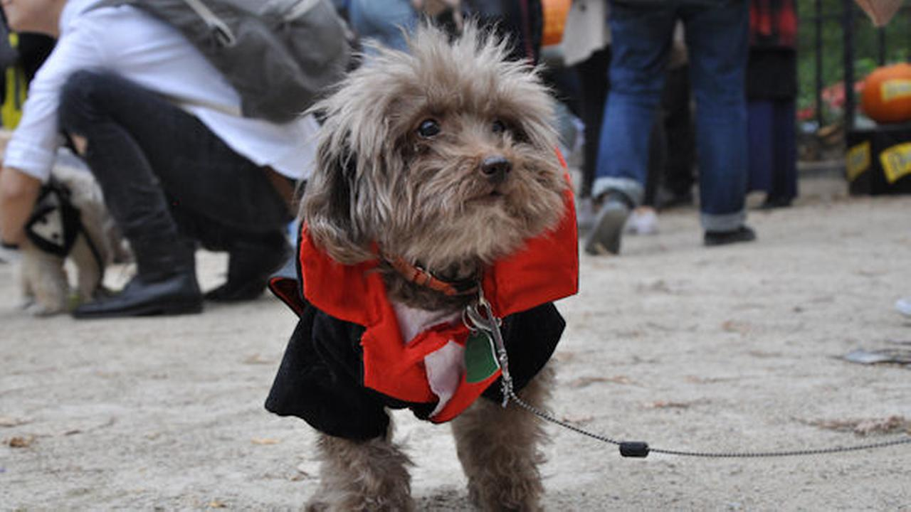 Over 250 dogs were at Tompkins Square Park for the event.
