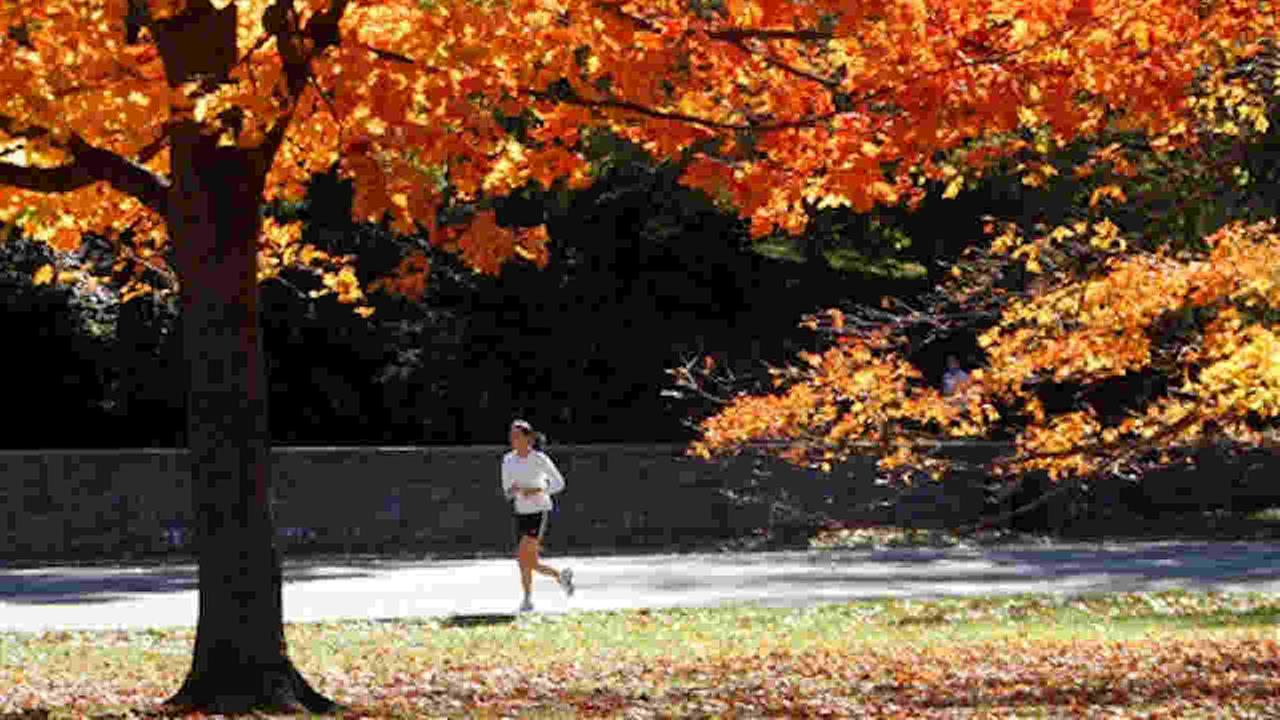 Central Park has had temperatures in the 70s this week.