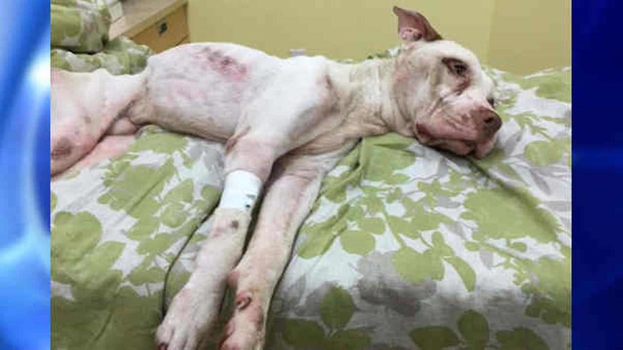 Reward offered after abused dog found in Brooklyn parking lot