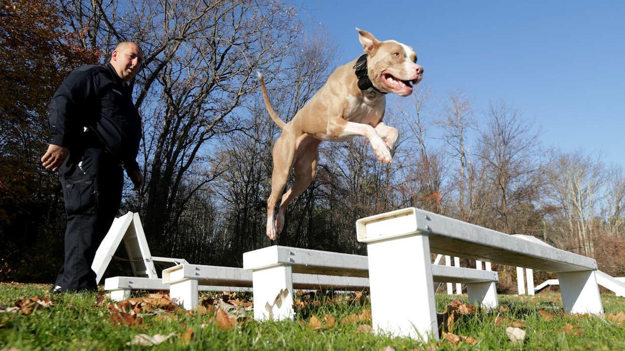 poughkeepsie pit bull police dog