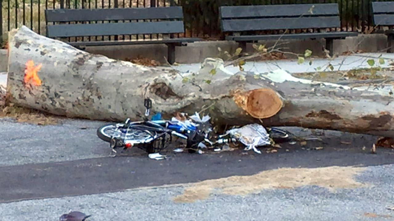 Delivery man dies 2 days after struck by falling tree while on bike in Red Hook