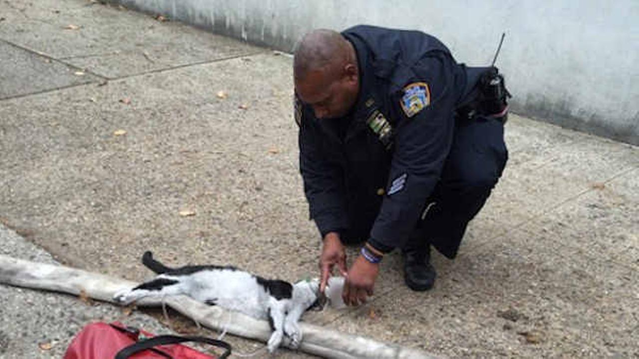 (NYPD Photo)
