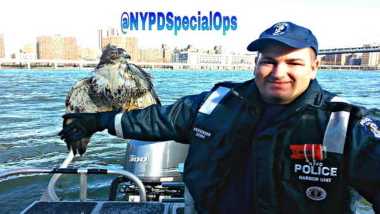 NYPD officers rescue hawk in distress in East River