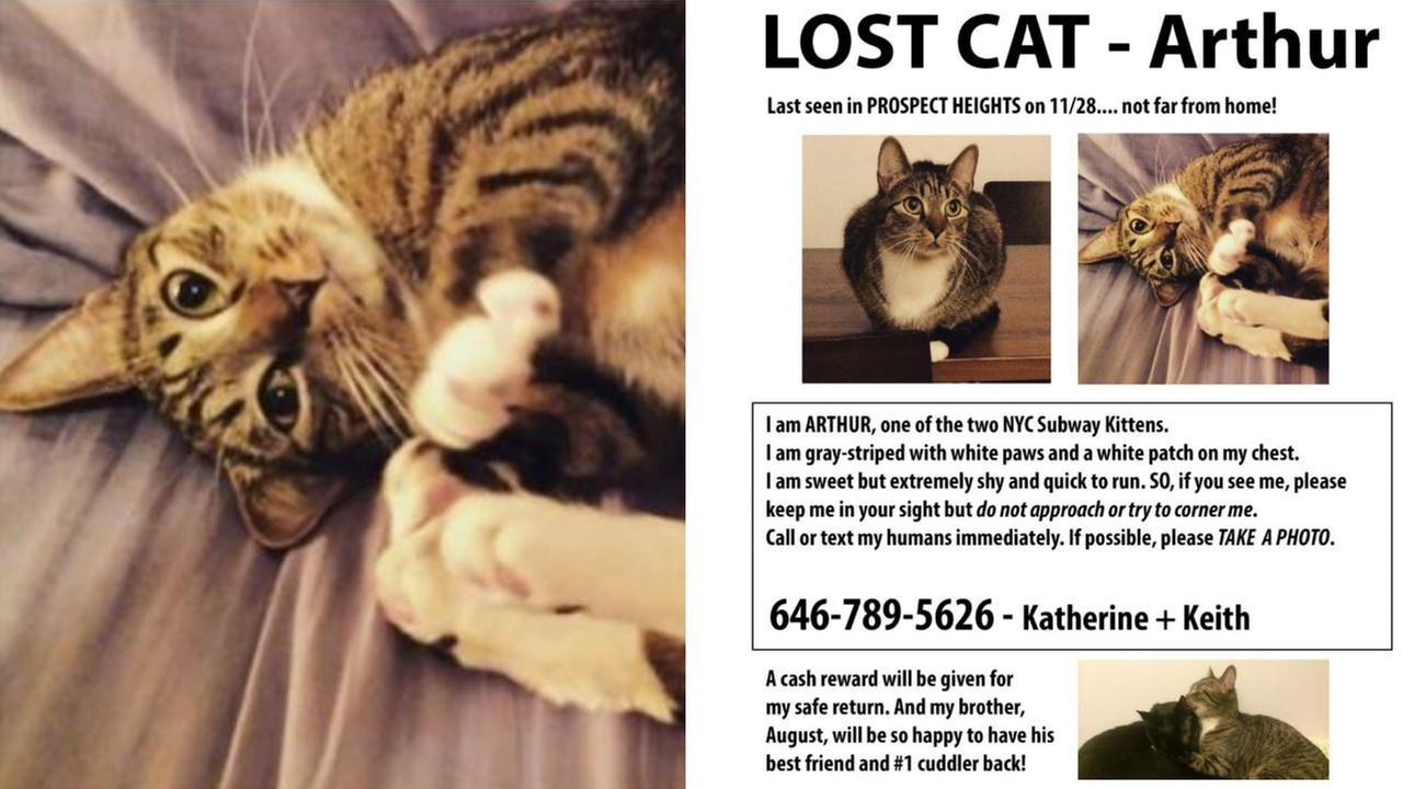 Arthur, cat that stopped subways in 2013, missing