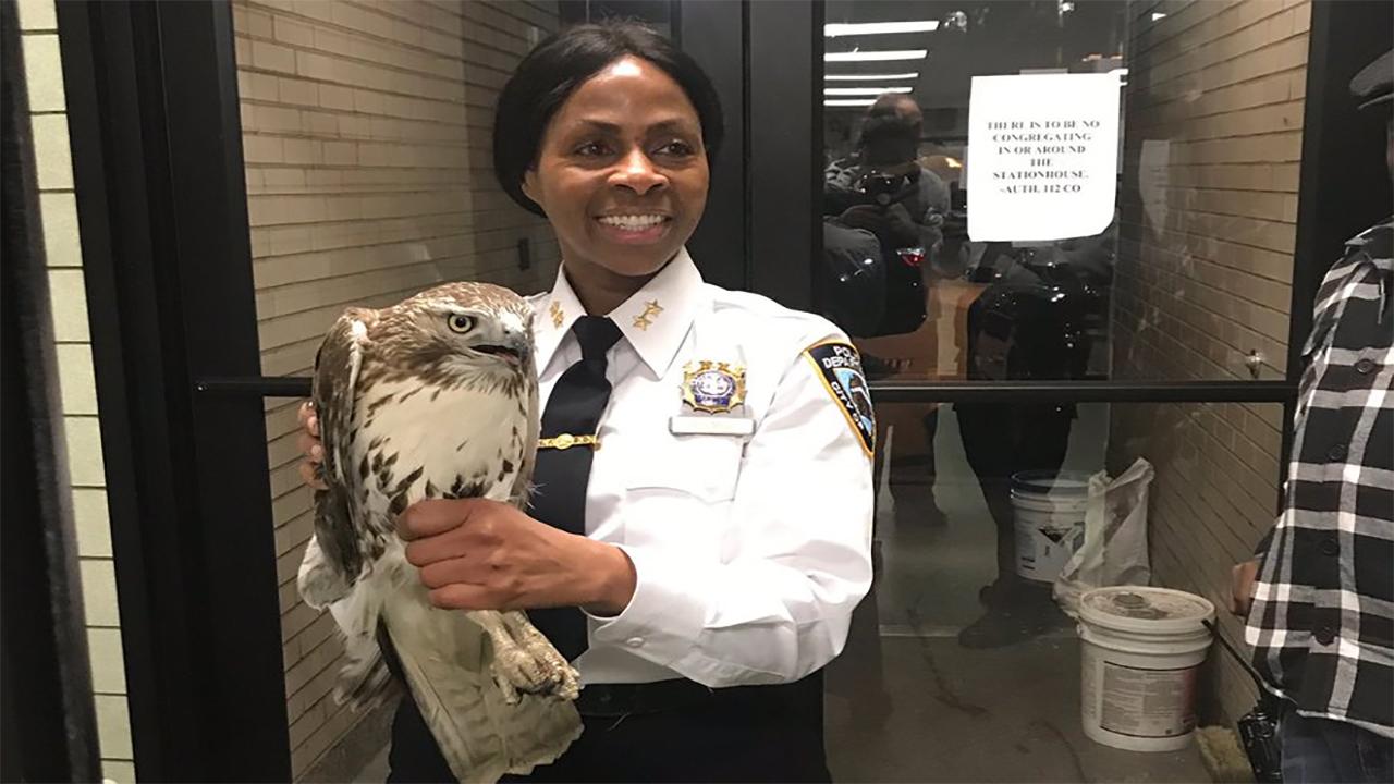 Hawk mistaken for burglar after smashing through window of home in Queens