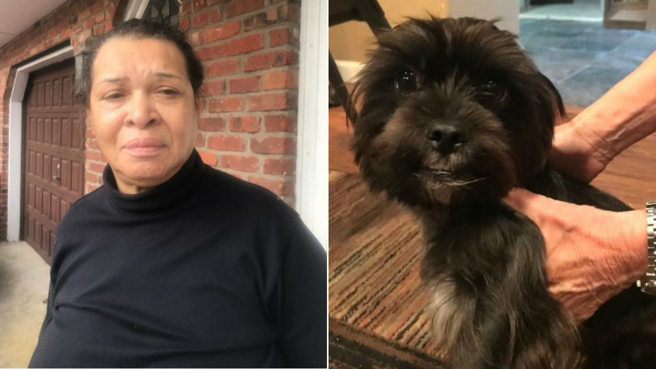 Woman accused of abandoning dog on Long Island road, driving away