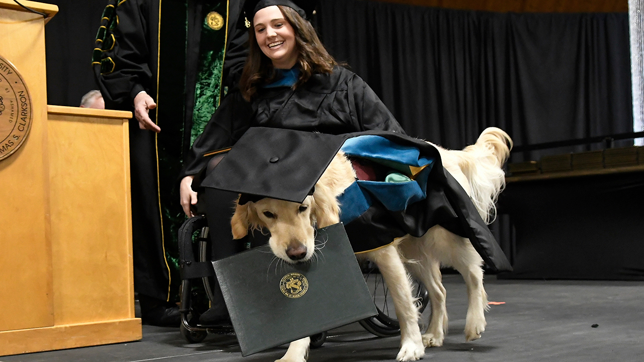 Griffin Hawley, the Golden Retriever service dog, is presented an honorary diploma during the Clarkson University December Recognition Ceremony in Potsdam, N.Y.