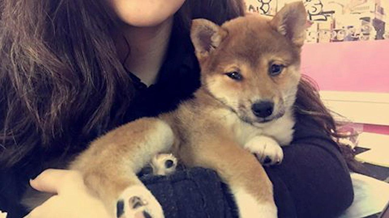 Puppy stolen from pet store in Kearny found