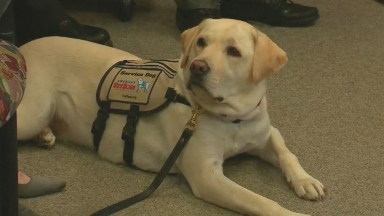Sully, former President George HW Bush's service dog, honored in New York