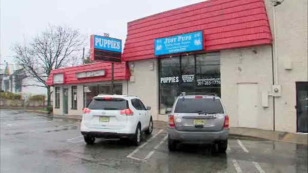 Police: 50 puppies, small dogs found in van behind New Jersey pet store