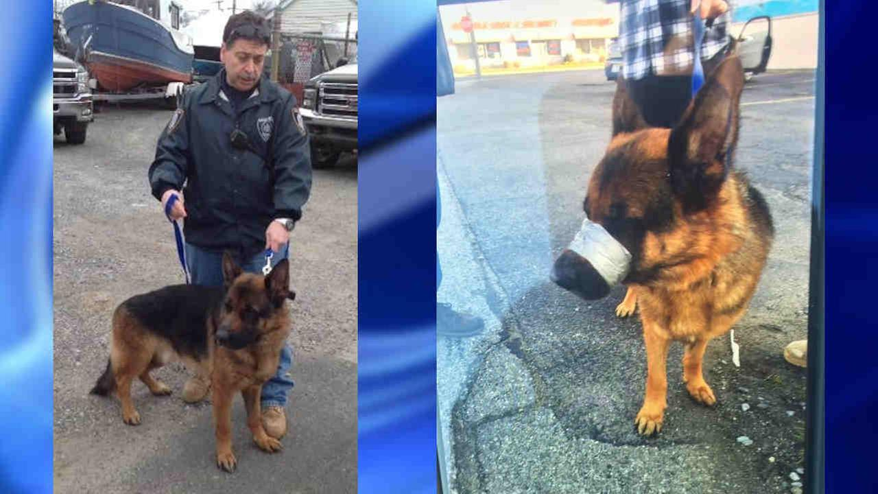 Long Island officials search for person who taped dog's mouth shut