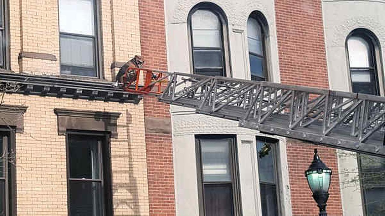 Hoboken Fire Department rescues dog that wandered onto ledge