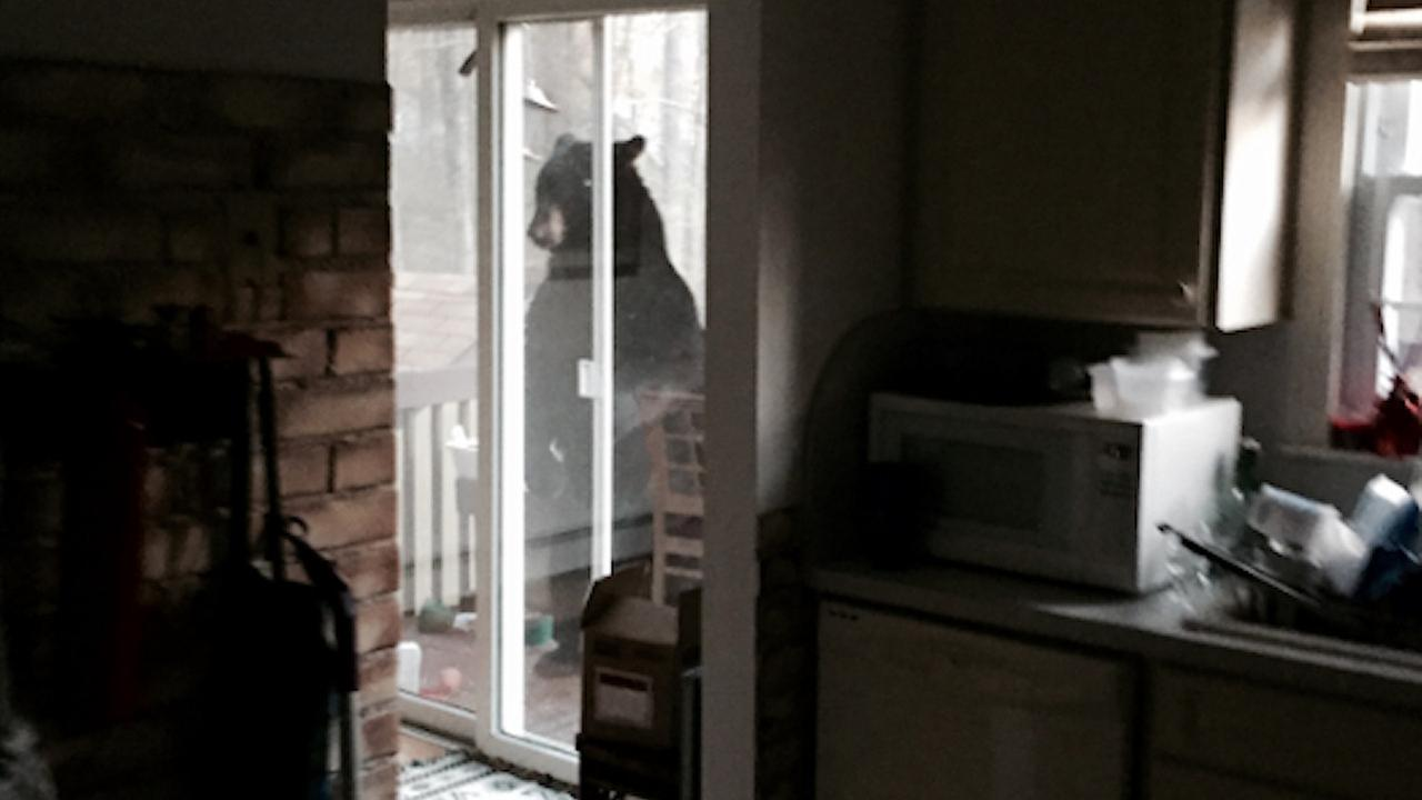 Bear steals bird feeder in Denville