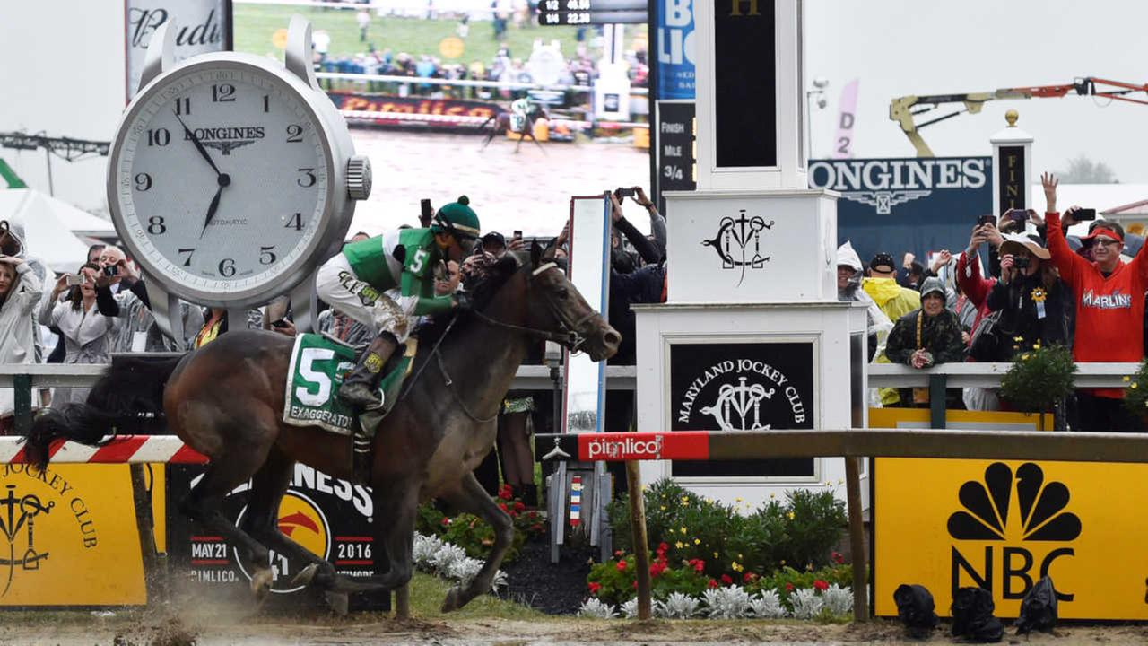 Exaggerator wins Preakness Stakes, ending Nyquist's quest for Triple Crown
