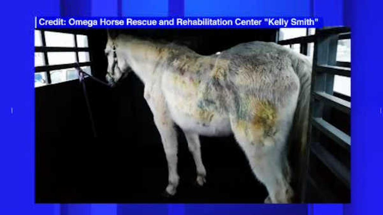 Jon Stewart, wife adopt horse shot over 100 times with paintballs