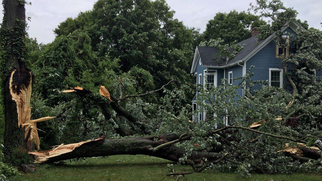 Trees down in North Haven, Connecticut