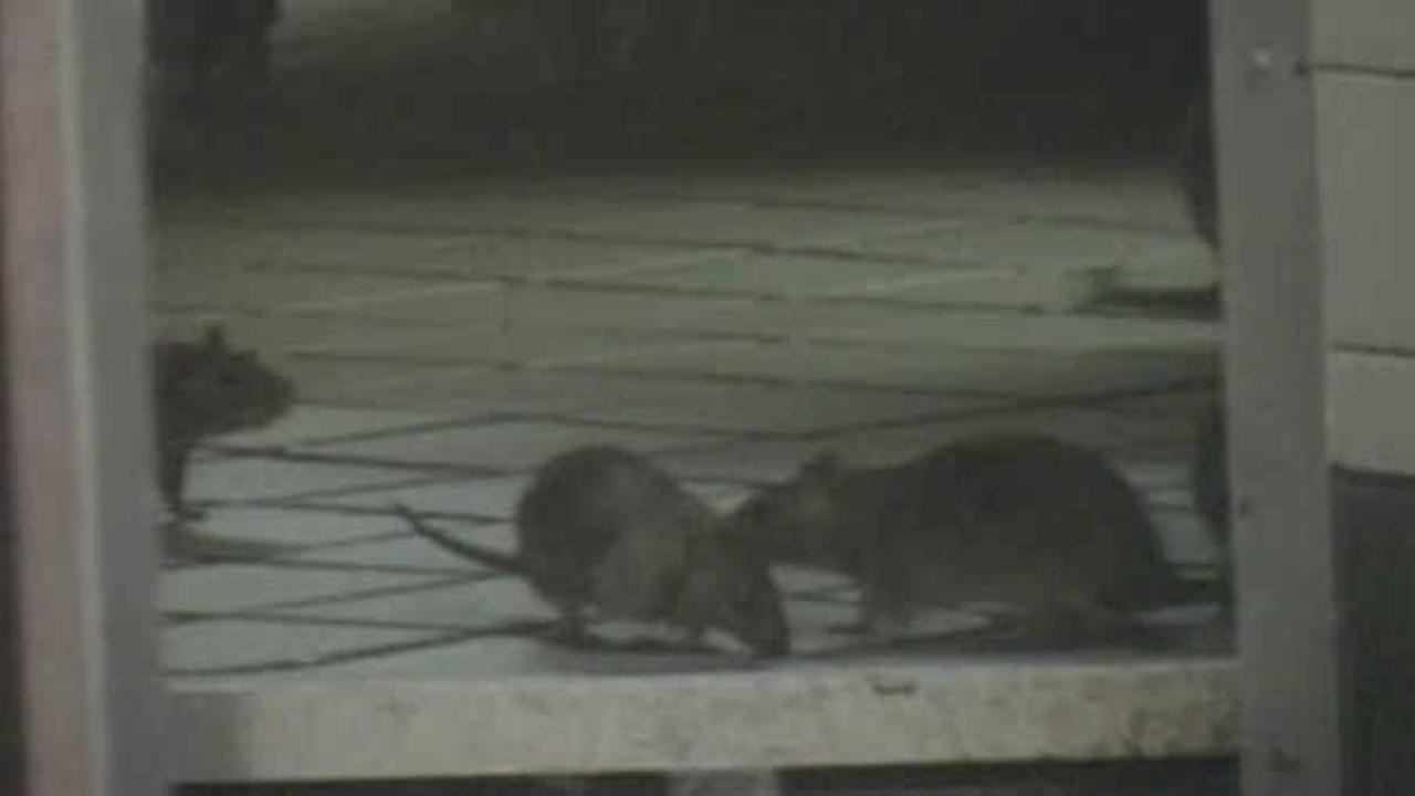 NYC officials host 'Rat Academy' with tips to keep rodents out