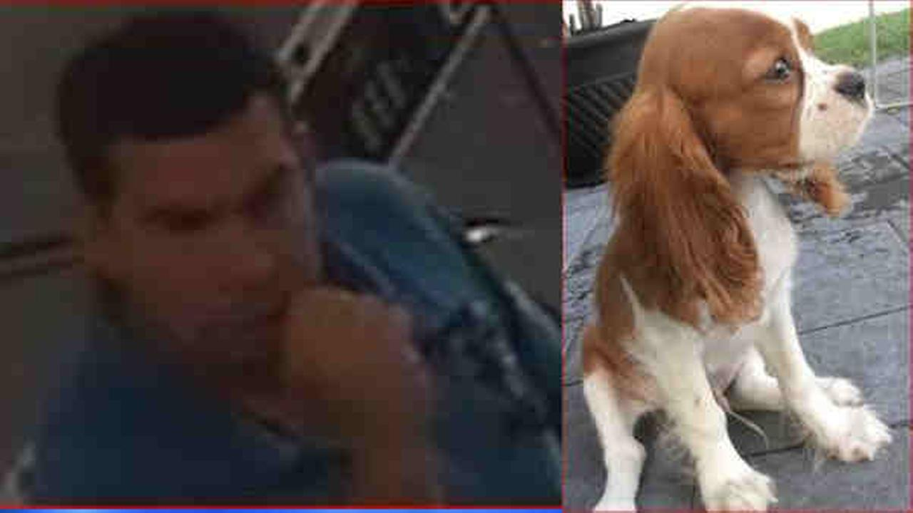 Police are looking for a man who they said stole a dog from a Brooklyn laundromat.